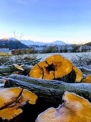 Trestokker -|- Left Logs (erlingsi) Tags: logs stokker volda ocher oker stammer log