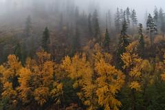 Autumn Landscapes (jeff's pixels) Tags: leavenworth washington landscape autumn color nature hiking pnw outdoors fog tree water river wenatchee bird bus plane