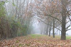 Misty Days ... (MargoLuc) Tags: autumn foggy days path trees fallen leaves carpet mist park walk cold mood soft light season