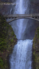 Multnomah Falls and Benson Bridge - Troutdale OR - Pano (moelynphotos) Tags: waterfall multnomahfalls oregon troutdale panoramic nature columbiarivergorge traveldestination tall water cascading bridge bensonbridge outdoors beautyinnature december moelynphotos
