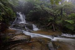 Leura Cascades (David Marriott - Sydney) Tags: bluemountains newsouthwales australia au leura cascades fog mist cloud long exposure blue mountains nsw