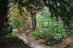 Autumn Path (Bri_J) Tags: chatsworthhousegardens bakewell derbyshire uk chatsworthhouse chatsworth statelyhome nikon d7500 autumn fall trees path