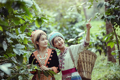 culture,tradition,lifestyle,outdoors,people,person,smile,traditional,two,white (Sutipond Somnam) Tags: culture tradition lifestyle together togetherness friendship friends female young woman nature tree foresttrees chiangmai asia portrait basket thailand fields coffee hmong laos vietnam beautiful beauty closeup couple dress face fashion fun girl happiness happy islam islamic leisure love man muslim outdoors people person smile traditional two white