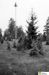 tm_6088 - 1950 (Tidaholms Museum) Tags: svartvit positiv skog natur 1950 1950talet
