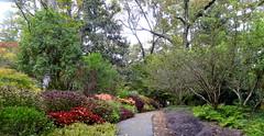 Birmingham Botanical Gardens (austexican718) Tags: botanical garden landscape flora foliage travel autumn november usa sony