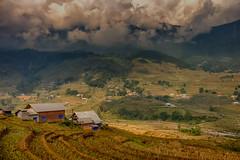Sapa, Vietnam (Tommy K Le) Tags: landscape houses riceterrace clouds mountain fields surreal travel sapa vietnam fujifilmxt1 beautiful colorful flickrunitedaward