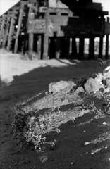 Dawn's Light (squirtiesdad) Tags: wildflower dawn shadows rocks sand rocksprings train trestle mojave riverbed high desert hesperia diyfilmscanning selfdeveloped vivitar 220sl super takumar f18 epson v600 monochrome blackandwhite bw analog analogue arista aristaedu iso100 35mm