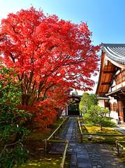 興臨院の紅葉 (katsuzin13) Tags: kyoto daitokuji temple autumnleaves 京都 大徳寺 興臨院 紅葉