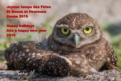 Fêtes 2019 (boisvertvert1) Tags: