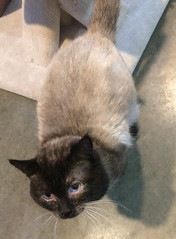 Snickers - 4 year old neutered male