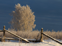 the contrast of december (Sergey S Ponomarev) Tags: sergeysponomarev canon 70d eos nature natura landscape paysage paesaggio landschaft rural countryside winter inverno snow neve fence wood trees clouds december decembre 2018 cold frost ef70200mmf4lisusm kirov russia russie russland europe europa north nord vyatka grass morning sunrise contrast сергейпономарев природа пейзаж утро контраст трава деревья мороз иней зима декабрь рассвет снег европа киров вятка облака свет холод