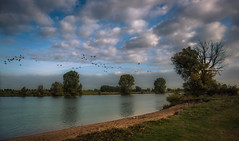 Relocate (Ingeborg Ruyken) Tags: shertogenbosch autumn october birds floodplain fall flickr herfst ochtend vogels riverforeland river maas rivier 500pxs natuurfotografie meuse instagram maasuiterwaarden oktober