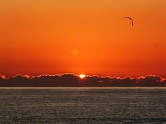Primer amanecer 2019 (8) (calafellvalo) Tags: amaneceralbasolcalafellseaalbadasunrise amanecer sunrise amanecerdelaño2019 alba albada sea mar calafellvalo contraluz calafell aves gaviotas