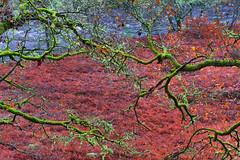 Loch Ard Forest, Loch Lomond and Trossachs National Park In The Rain. (rockyrutherford) Tags: bracken plants moss green scotland d7100 nikon hdr