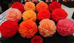 Begonias (Seventh Heaven Photography **) Tags: 131st shrewsbury flower show shropshire nikon d3200 flowers flora blooms begonia begonias pink orange red