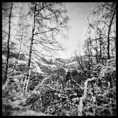 (julien_o_O) Tags: holga bw winter snow square savoie mountain