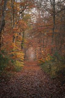 Les feuilles mortes