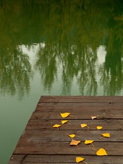 Each leaf is a wish ... (Raquel Borrrero) Tags: autumncolors autumn automne otoño coloresdeotoño paisajedeotoño landscape lake lago embarcadero reflection reflejo hojas leaves leaf pier trees arboles naturephotography natur colors naturalcolors yellow green brown waterscape