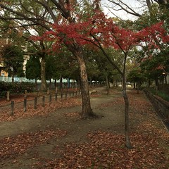 初冬の散歩道 (eyawlk60) Tags: path earlywinter autumn momiji 散歩道 紅葉 初冬 晩秋 小径 flickraward