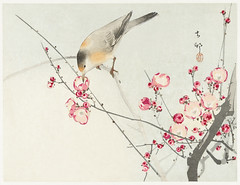 Songbird on blossom branch (1900 - 1936) by Ohara Koson (1877-1945). Original from The Rijksmuseum. Digitally enhanced by rawpixel. (Free Public Domain Illustrations by rawpixel) Tags: pdproject21batch2x otherkeywords tagcc0 animal antique art asian bird blossom branch drawing flower illustration japan japanese koson museum name ohara oharakoson old paint rijksmuseum songbird vintage