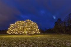 IMGP0250-Edit-2-Edit (jarle.kvam) Tags: tree christmas moon sky clouds christmastree norway arendal hisøy