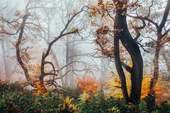 Lost in Autumn VI (J C Mills Photography) Tags: peakdistrict derbyshire woodland stantonmoor autumn fall trees birch beech colours mist fog landscape