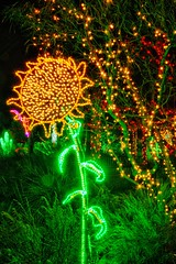 sunflower and lights (JoelDeluxe) Tags: rol riveroflights abq biopark nm december 2018 albuquerque biological park pnm light display colors lights sculptures fantasy newmexico hdr joeldeluxe