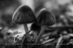 Happy New Year (ILO DESIGNS) Tags: nature naturaleza naturallight blackandwhite blancoynegro mushroom setas forest bosque wildlife monochrome monocroma closeup macro sigma15028 nikon d3300 2019