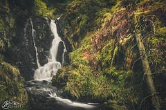 Peggie's Spout (►►M J Turner Photography ◄◄) Tags: peggiesspout binburn campsiefells burn stream spout waterfall cascade forest woodland forestry meiklebin scotland uk