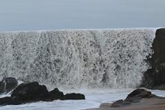 IMG_0546 (monika.carrie) Tags: monikacarrie wildlife scotland aberdeen waves
