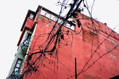 turkishwiretasting (Visavis..) Tags: turkey red grapes wires istanbul 35mmequiv fujix100