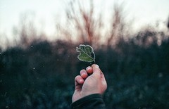 (AIeksandra) Tags: leaf nature green hand dof closeup perspective bokeh cremona fiumepo 35mm film analogue praktical lombardia pianurapadana frozen frost