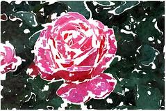 Ich möcht ein Segen sein mehr (amras_de) Tags: rose rosen ruža rosa ruže rozo roos arrosa ruusut rós rózsa rože rozes rozen roser róza trandafir vrtnica rossläktet gül blüte blume flor cvijet kvet blomst flower floro õis lore kukka fleur bláth virág blóm fiore flos žiedas zieds bloem blome kwiat floare ciuri flouer cvet blomma çiçek zeichnung dibuix kresba tegning drawing desegnajo dibujo piirustus dessin crtež rajz teikning disegno adumbratio zimejums tekening tegnekunst rysunek desenho desen risba teckning çizim