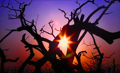 AFRICA - Dead tree at sunset (Jacques Rollet (Little Available)) Tags: tree arbre sun soleil sunset crépuscule africa exquisite
