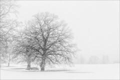Nebel und Raureif (ludwigrudolf232) Tags: bäume raureif nebel landschaft winter einfarbig