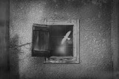 No exit... (petrapetruta) Tags: bw blackandwhite bird window ko120m