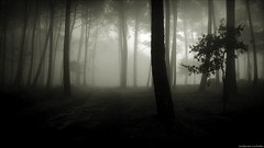 II/II (Guillermo Carballa) Tags: fog forest fenrs trees pines paths mist morning mobilephone carballa bw light woods shadows oaks