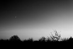 Crescent Moon (alexjneves) Tags: moon crescent crescentmoon blackwhite mon monochromatic sunset horizon tree plant sky