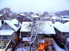 The First Snow Today (dimaruss34) Tags: newyork brooklyn dmitriyfomenko image sky snow buildings trees winter houses roofs