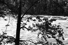 River in Finland (andrey.isakov) Tags: film blackandwhite contrast summer nature trees grain black canon ilford river water forest