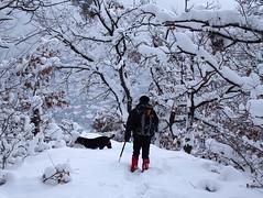 téli séta / winter walk (debreczeniemoke) Tags: tél winter hó snow fehér white erdő forest fa tree olympusem5