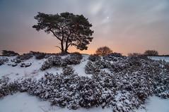 Snow and moon (Ejeej) Tags: landschap landscape moon moonlight moonlit tokina 1116mm
