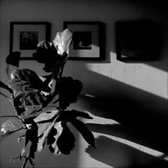 sonntagnachmittagslicht (fluffisch) Tags: fluffisch darmstadt hessen hasselblad 500cm mittelformat medium 11 zeiss planar 80mm cf f28 analog film negativ sw fuji acros100