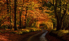 The way home, Gallowstree Common, Oxfordshire, England (Oswald Bertram) Tags: chilterns chilternhills thechilternsaonb autumncolours fall fallcolors herbst herbstfarben automne couleursdautomne otoño coloresdelotoño countryside