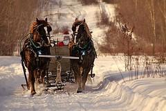 Santa Comes Early (cowgirlrightup) Tags: sleighride sunset cowgirlrightup horses snow santa horsebackshooting alberta canada