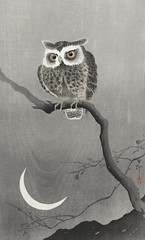 Long-eared owl on bare tree branch (1900 - 1930) by Ohara Koson (1877-1945). Original from The Rijksmuseum. Digitally enhanced by rawpixel. (Free Public Domain Illustrations by rawpixel) Tags: pdproject21batch2x otherkeywords tagcc0 animal antique art asian bird drawing illustration japan japanese koson longearedowl museum name ohara oharakoson old paint rijksmuseum vintage