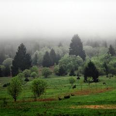 Half way (Robyn Hooz) Tags: cielo sky nebbia mist doom hug gray grigio montagna cadore