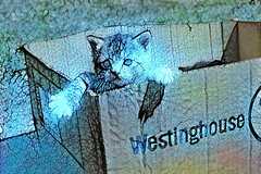 Here's Looking at You Kitten (Eclectic Jack) Tags: post processing process processed dream deep generate generator ddg art artistic dreamy kitten blue box westinghouse another era cute gato cat