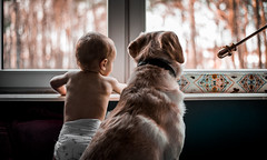 Friends. (jakub.sulima) Tags: nikon d750 nikkor 50mm f18 panoramic film movie child kid toddler dog labrador friends friendship home house window wall bokeh sky trees autumn november january boy explore world pet nanny colours colorful gold orange brown blue green yellow white grey violet purple black life couple cute sweet interior colour windows day