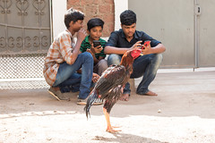 The Streets, Madurai (Geraint Rowland Photography) Tags: chicken bird poultry foodsource farm streetphotography streetportrait india lifeinindia streetphotographyinindia geraintrowlandphotography portraits children funny concentration kids streets madurai mobilephone technology mobiletechnology sitting watching wwwgeraintrowlandcouk travelinindia indianlife